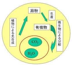 有機物の生分解とその循環